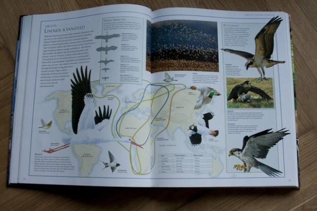 loomade atlas 081_v