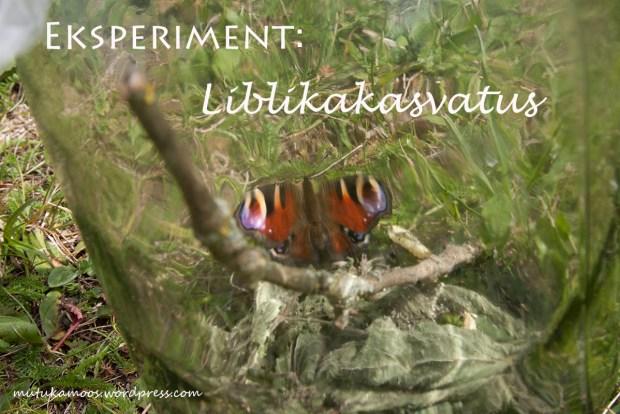 loodusõppe katse liblikas