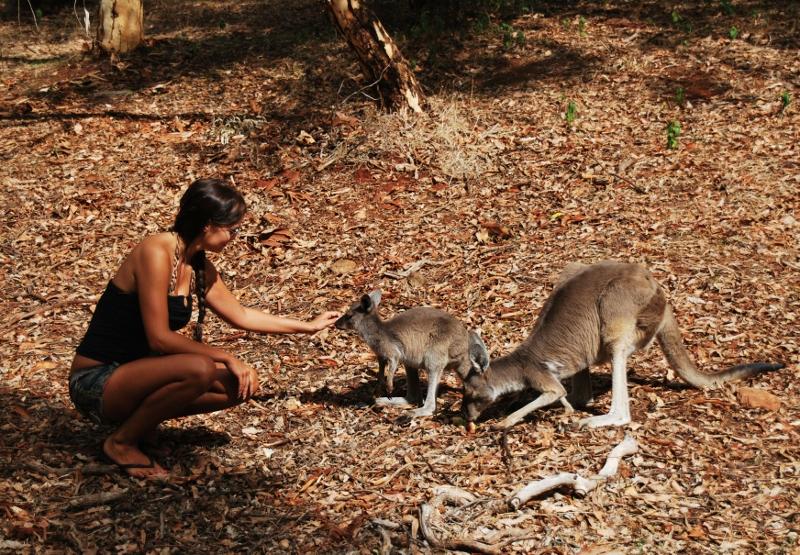 kenguru Serpentinen kansallispuistossa