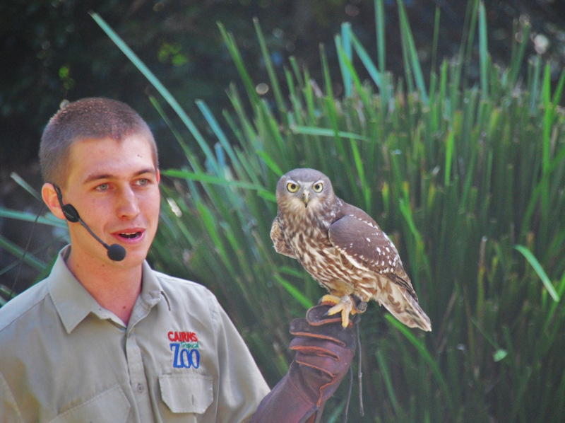 Cairnsin eläintarhan lintushow