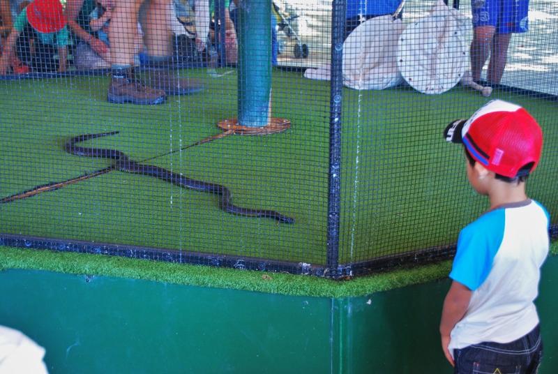 Käärmeshow Cairnsin eläintarhassa