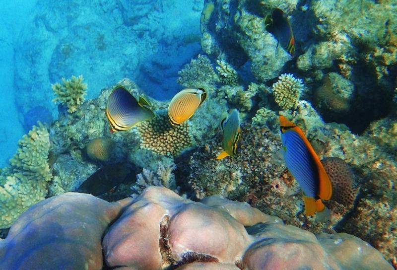 Koralleita Fidzin Yasawa saarilla