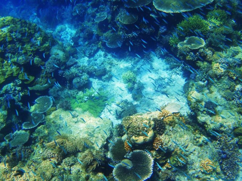 Snorklailua El Nidossa