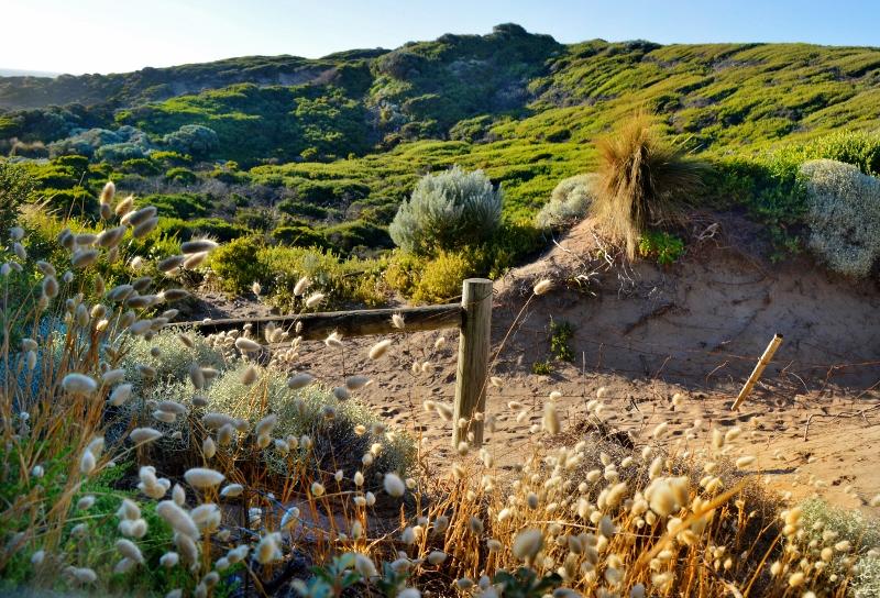 mornington peninsulan kansallispuistoa