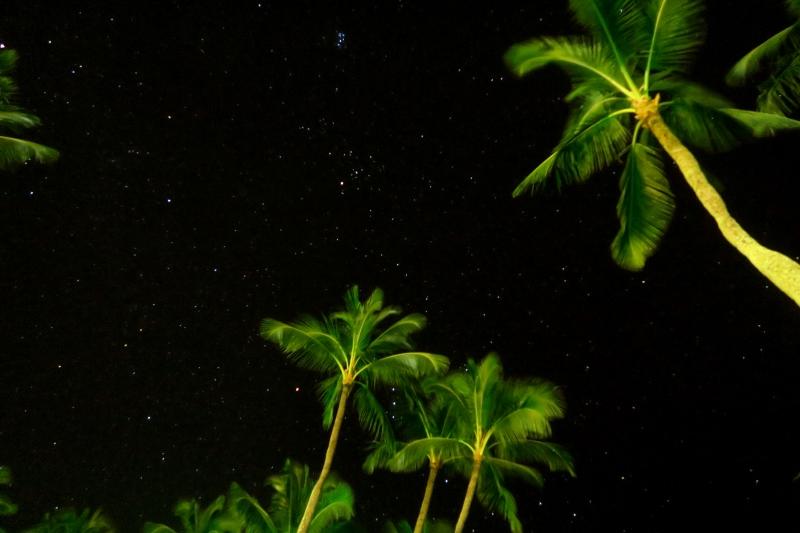 Palmuja ja tähtitaivas