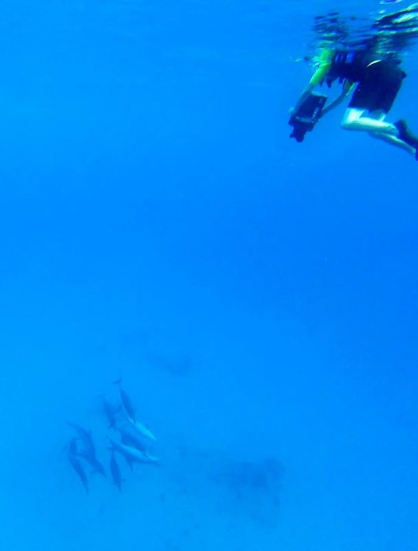 Swim with dolphins Havaiji