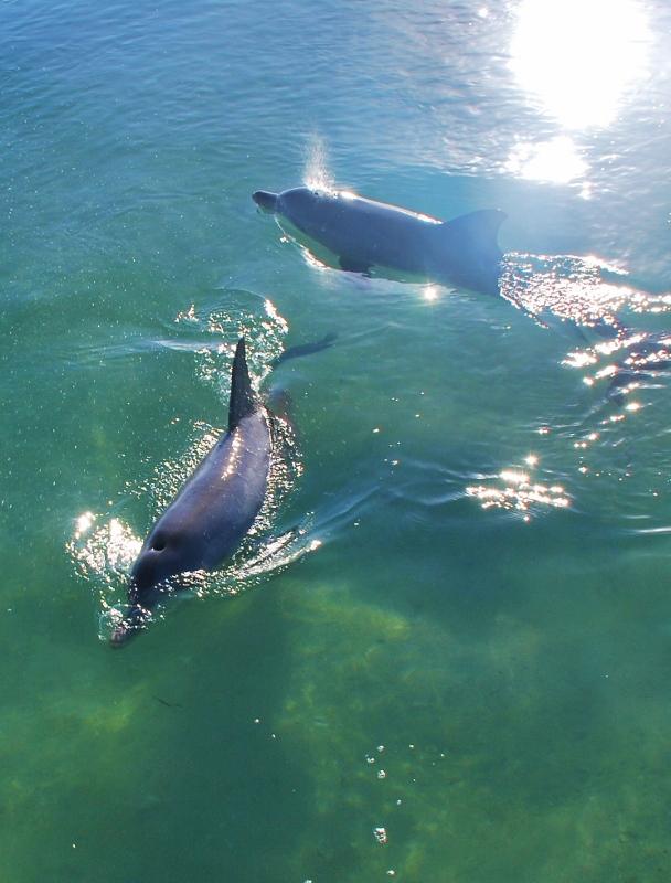 delfiinejä