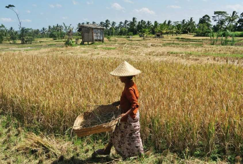 Bali vinkit | Maaseutua