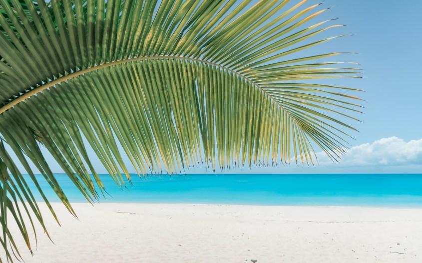 Uusi-Kaledonia | Palmunlehvä meren rannalla.