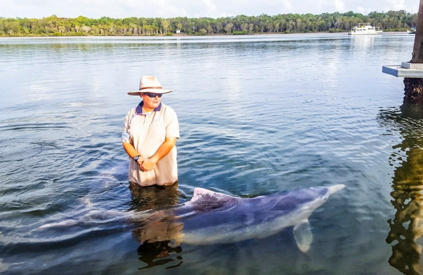 Näkemiin ja kiitos kaloista! Tin Can Bayn delfiinit