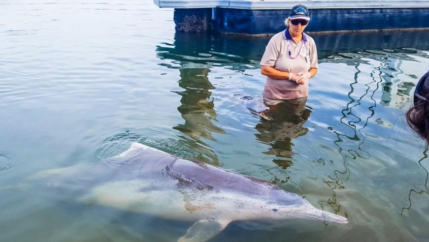Tin Can Bayn delfiinit