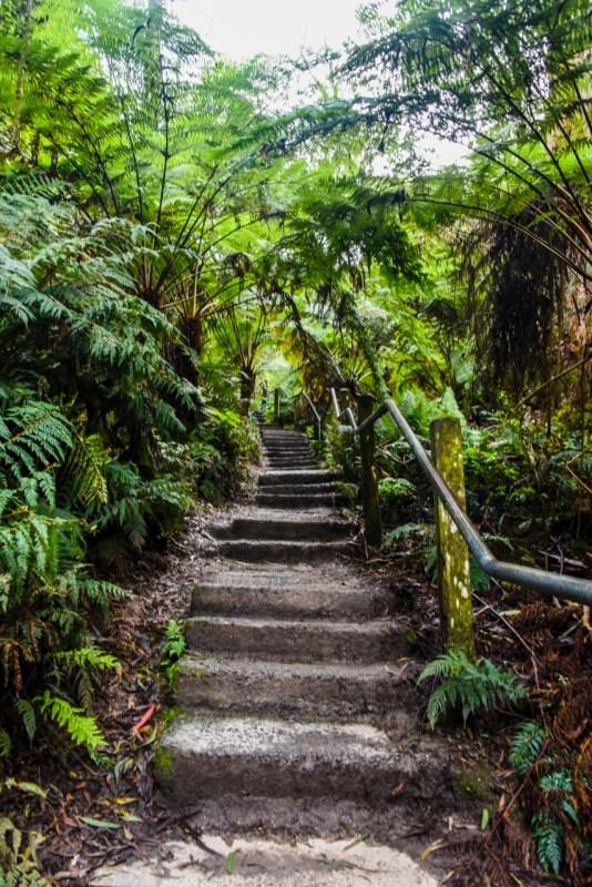 1000 Steps, Dandenongs