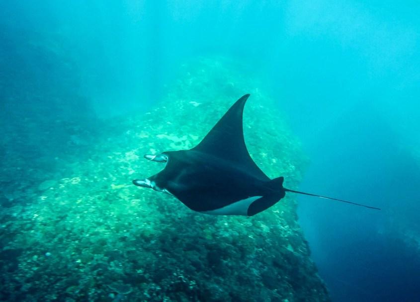 Nusa Lembongan snorklaus | Manta