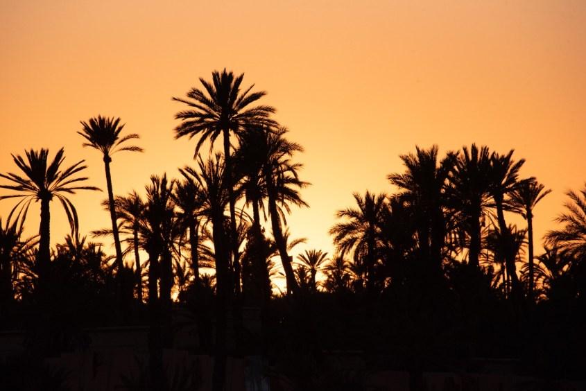 auringonlasku palmujen ylle