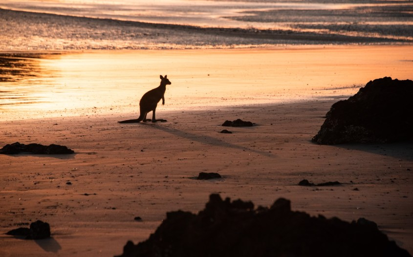Australian kansallispuistot | Cape Hillsborough