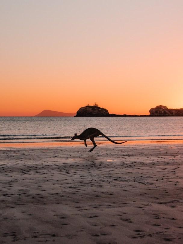 Kenguru rannalla