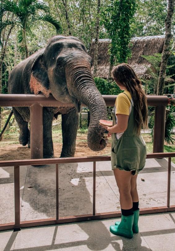 Vapaaehtoistyö eläinten kanssa | Ekomatkaajat