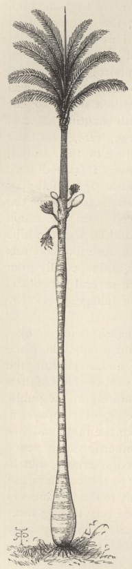palme