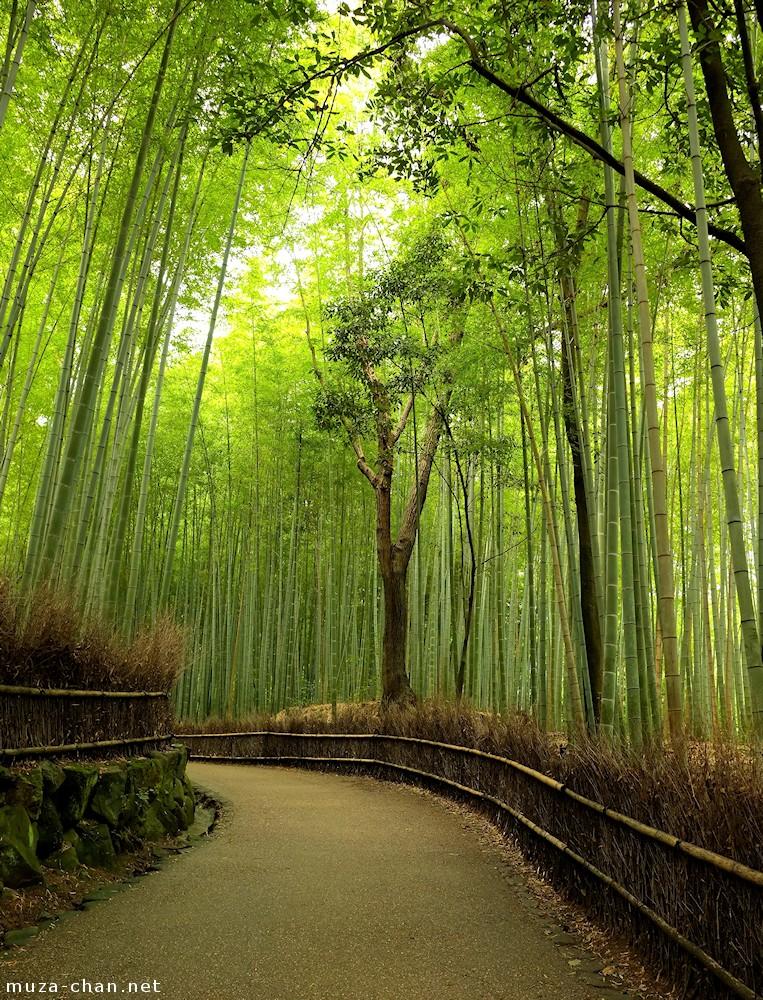 Image Result For Bamboo Garden