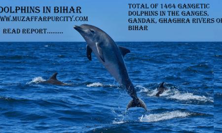 DolphIns in Bihar