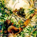 Read more about the article Нашите најрани предци и нивната еволуција