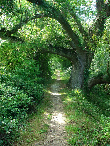 Tree-Path_druss101