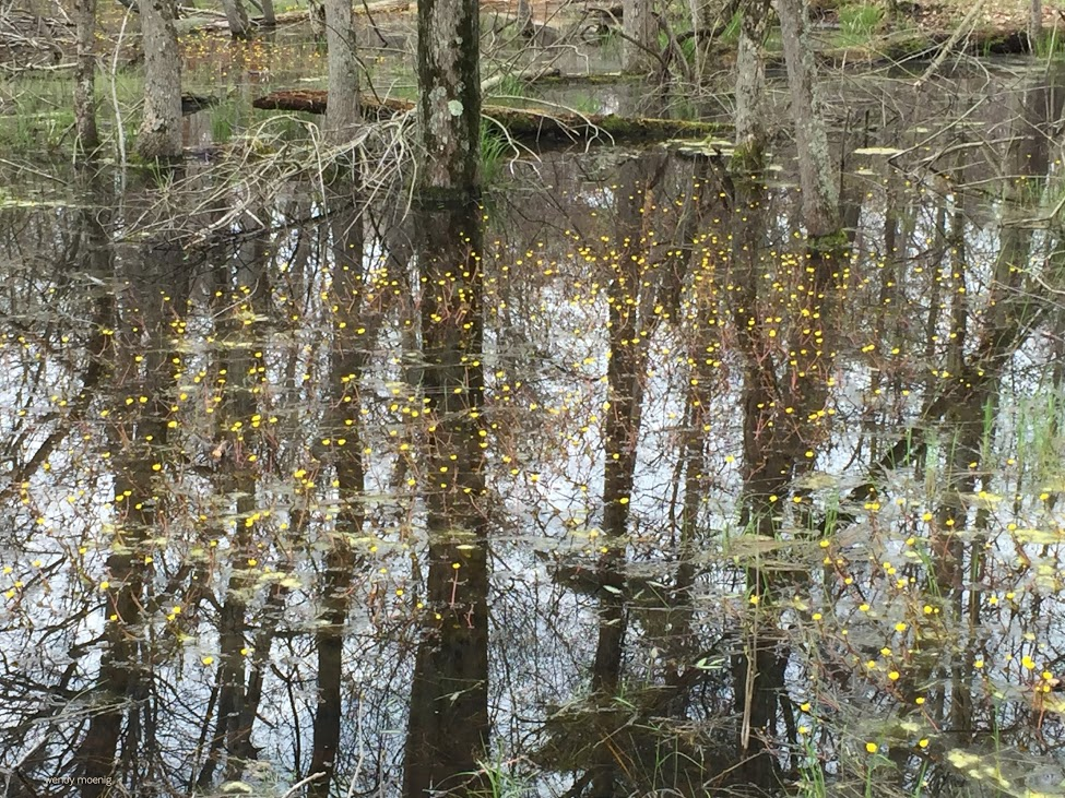 Image result for swamps lanark county