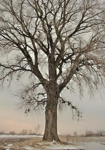 Photo of tree with shoes hanging from the branches.