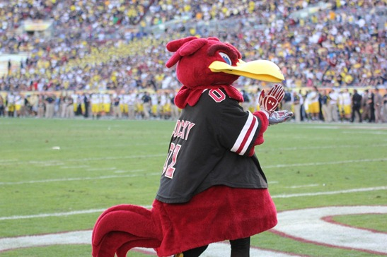 Cocky   2013 Outback Bowl
