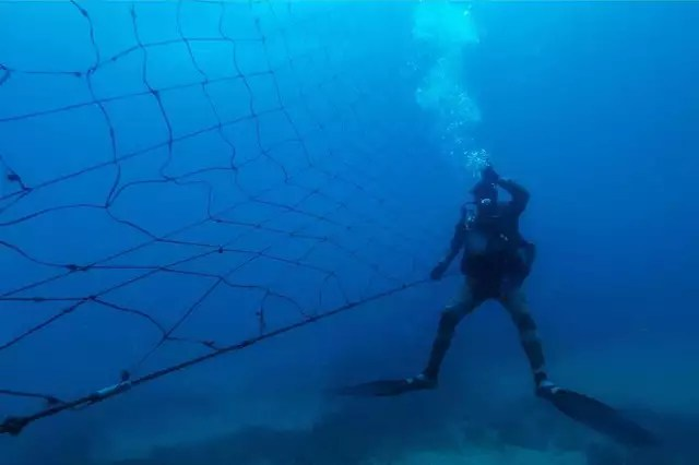photo to fight against shark attacks, nets are installed like this one in south africa.  but they kill sharks, dolphins indifferently… © photo: michele spatari / afp