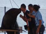 Ocean Adventures sea lion show