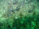 Sea Snake by Joan