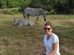 With the Zebras