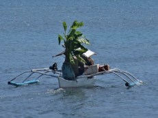 Palm Tree Delivery