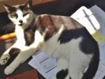 Nukaat Helps with Paperwork