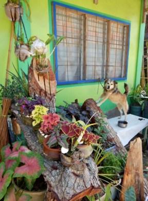 Guard Dog and Garden