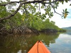 more-mangroves