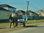 horse-drawn-cart