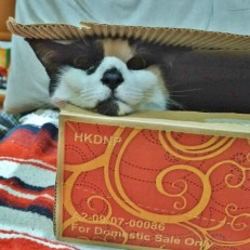 kitty-in-a-box