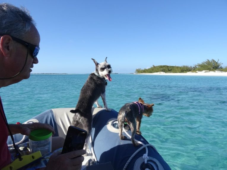 """Tugoat in his """"Spot"""" on the bow of the dingy"""