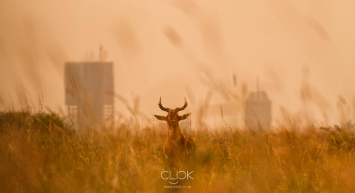 Nairobi_National_Park-1