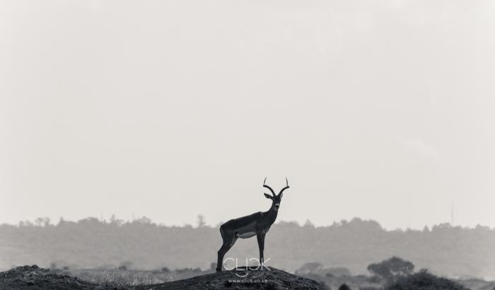 Nairobi_National_Park-3