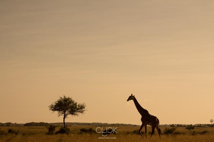 Nairobi_National_Park-5