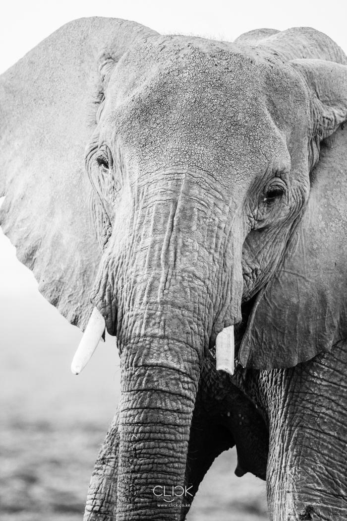 World_Elephant_Day-1