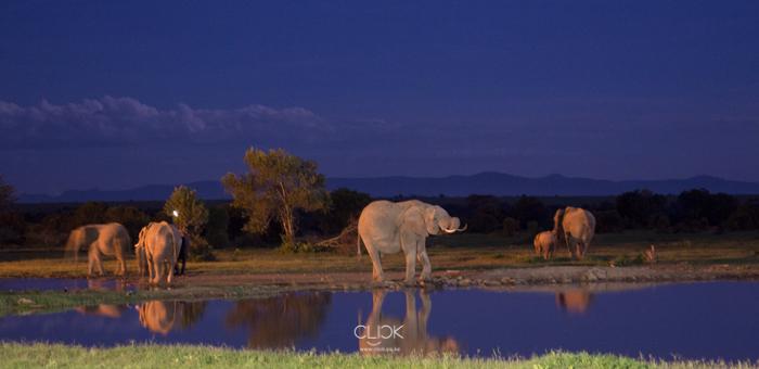 World_Elephant_Day-16