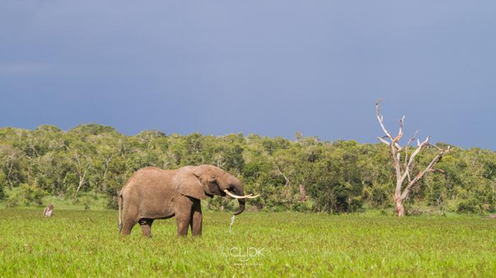 World_Elephant_Day-9