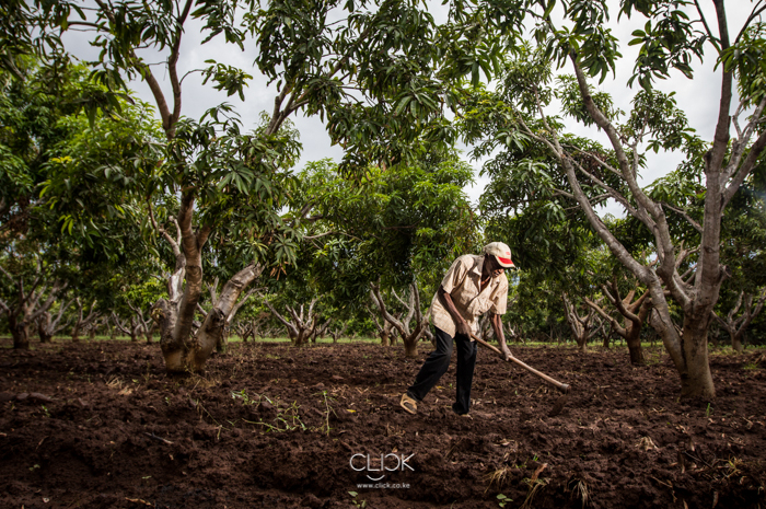 Kenya_Farmer-23