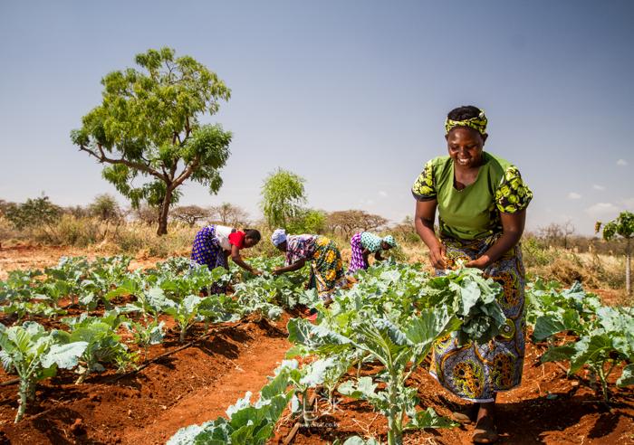Kenya_Farmer-4