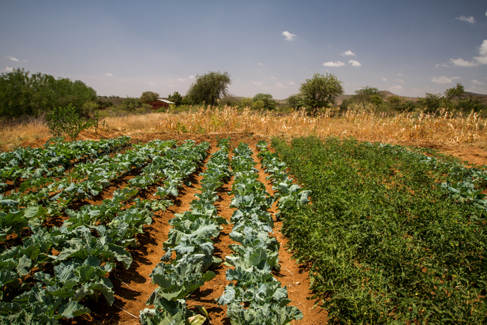 Kenya_Farmer-6