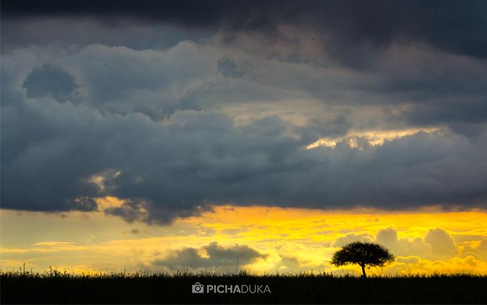 African Screens 59 – Nairobi National Park Sunset
